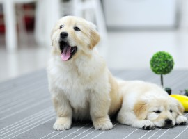 I Love Pet! 펫시터 양성과정 - 취업…